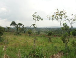 The Africa Bureau of Children's Development (ABCD) has placed a deposit on the 275 acre agriculture land