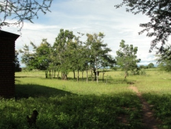 Seen here the UCT land in Malawi donated for the first Malawi PowerPlay Center.