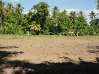 One of the lands in Haiti where UCT has established a Moringa pilot project