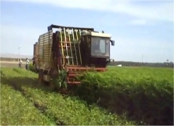 Seen here a commercial Moringa harvesting machine.