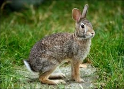Moringa leaf meal (MOLM) could be used to improve daily weight gain in rabbits.
