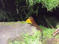 Numerous other wild animals find haven in the cool, moise environment of the rain forest.