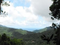 The trail through the rainforest is short and well signposted with two overlooks, one provides a view down the Belle Fille Valley towards the rough Atlantic east coast of the island.