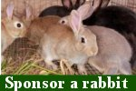 CLICK to sponsor a rabbit