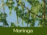 Africa Moringa Project
