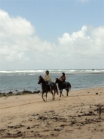 Another wonderful thing to experience is horse riding along Bath beach.